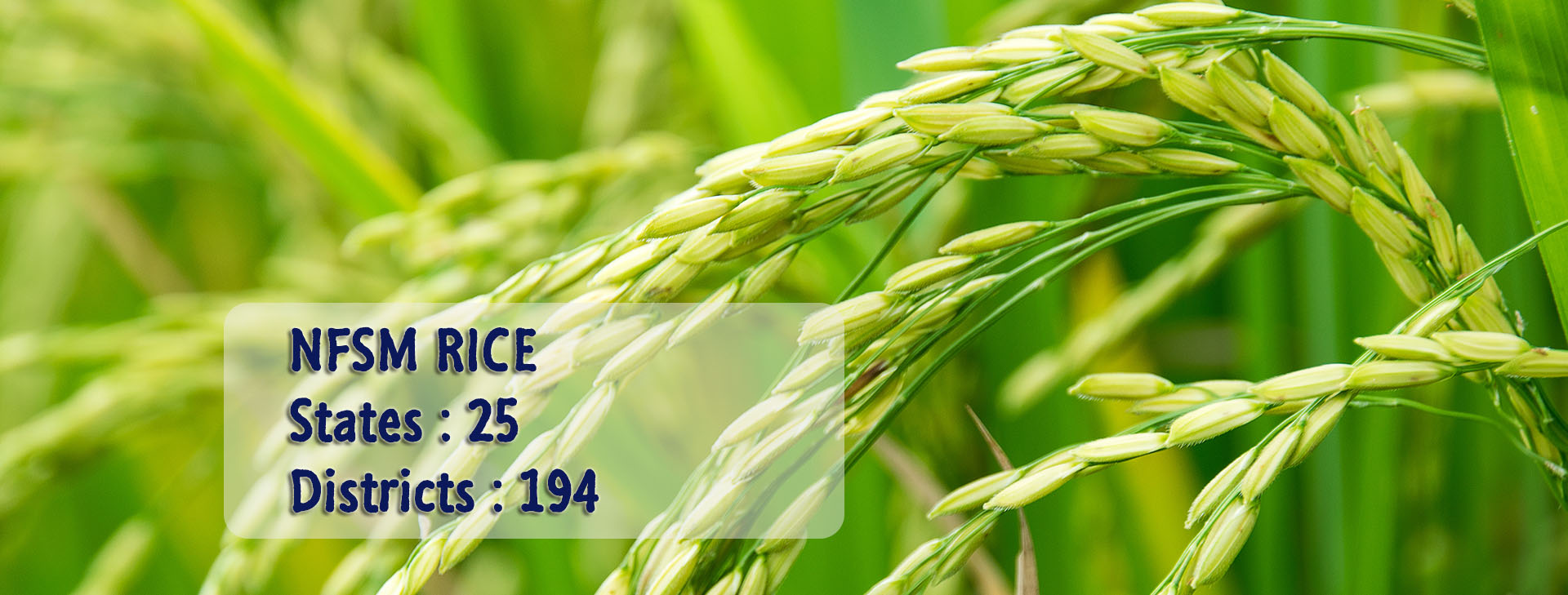 NFSM: National Food Security Mission
